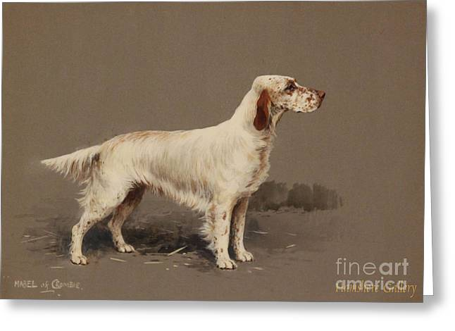 Full-length Portrait Greeting Cards - Mack of Crombie Greeting Card by Celestial Images