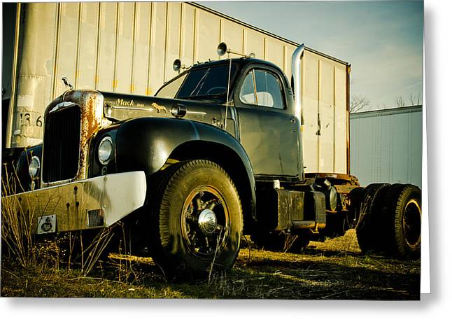 Bobtails Greeting Cards - Mack  Greeting Card by Off The Beaten Path Photography - Andrew Alexander