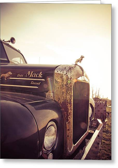 Bobtails Greeting Cards - Mack Profile Greeting Card by Off The Beaten Path Photography - Andrew Alexander
