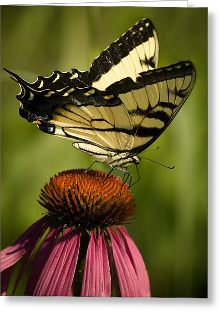 Large Photos Greeting Cards - Macro Butterfly Greeting Card by Jack Zulli