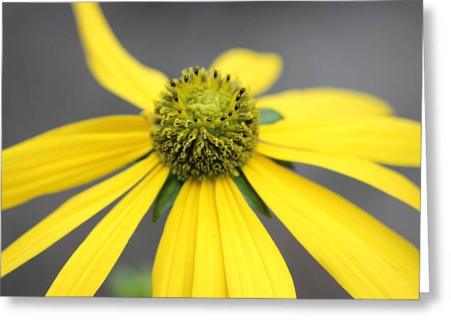 Macro Flower Photography Greeting Cards - Macro Flower Greeting Card by Martin Newman