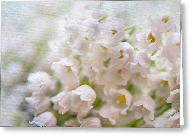 The Mint Greeting Cards - Macro Lilies of the Valley Greeting Card by Jenny Rainbow