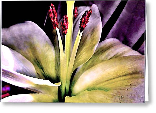 Macro Luminous Lily  Greeting Card by Danielle  Parent