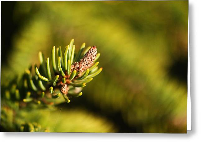 Pine Needles Greeting Cards - Macro of an evergreen Greeting Card by Jeff  Swan