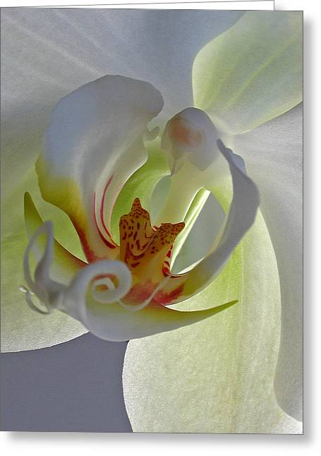 Keeffe Greeting Cards - Macro Photograph of an Orchid  Greeting Card by Juergen Roth