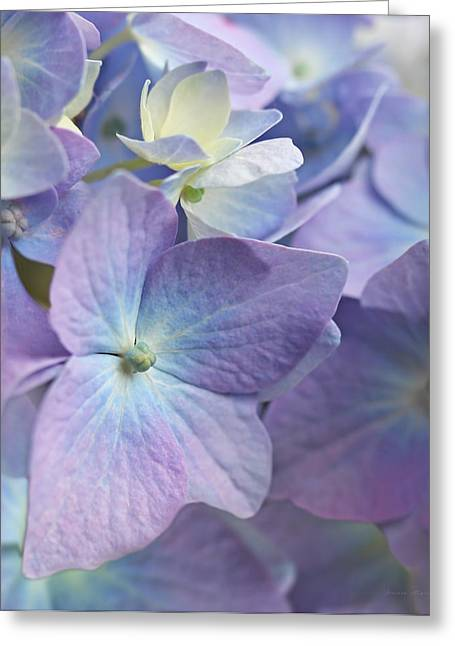 Purple Hydrangeas Greeting Cards - Macro Purple Hydrangea Flowers Greeting Card by Jennie Marie Schell