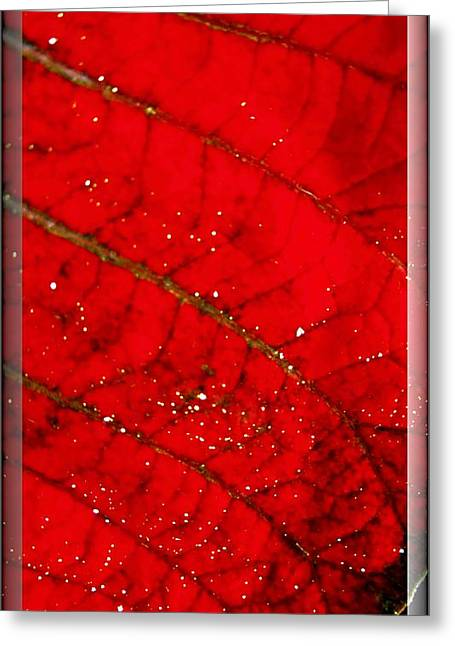 Macro Red Poinsettia Leaf Greeting Card by Danielle  Parent