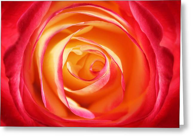 Abstract Rose Abstract Greeting Cards - Macro Swirls Rose Flower Greeting Card by Jennie Marie Schell