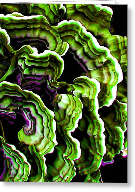 Fungi Greeting Cards - Macro Saprophyte in Green Greeting Card by Bill Caldwell -        ABeautifulSky Photography