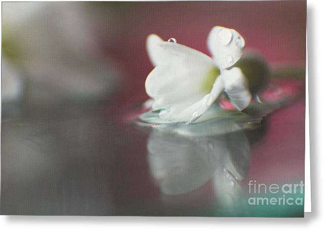 Soft Light Greeting Cards - Macro Wild Floral Textured Greeting Card by Eden Baed