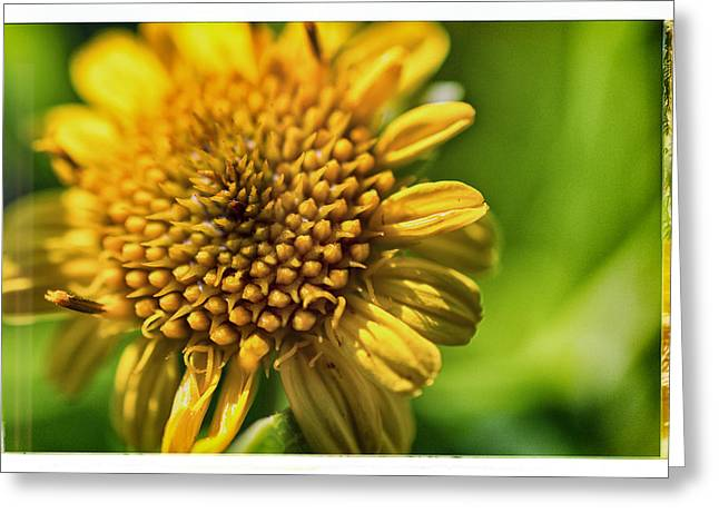 Florida Flowers Pyrography Greeting Cards - Macro Wild Flower Greeting Card by Shawn Bussey