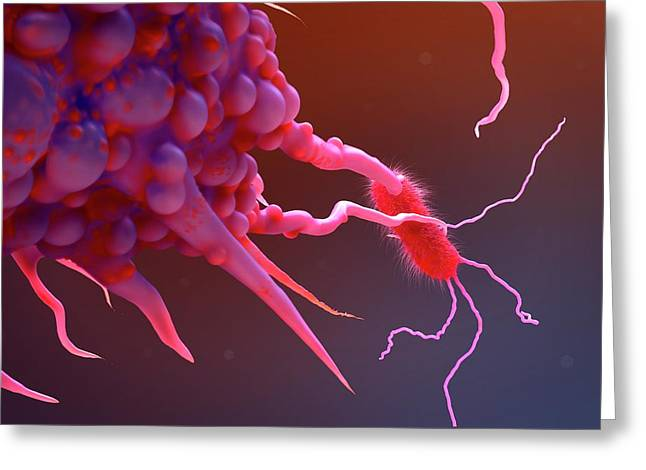 Macrophage Engulfing Bacteria Greeting Card by Tim Vernon