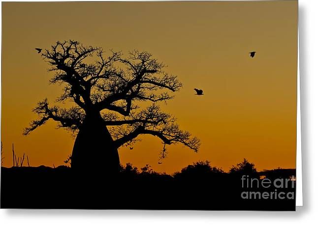 Bird Bottle Greeting Cards - Madagascan Sunrise Greeting Card by Ashley Vincent