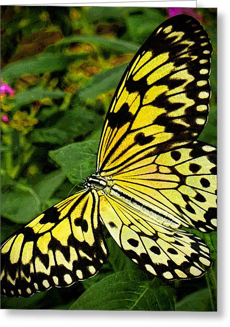 Dave Bosse Greeting Cards - Madam Butterfly Greeting Card by Dave Bosse