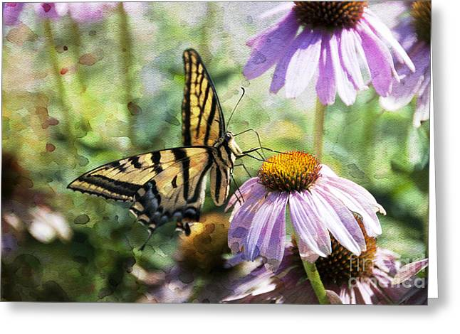 Coneflower Greeting Cards - Madame Butterfly Greeting Card by Juli Scalzi