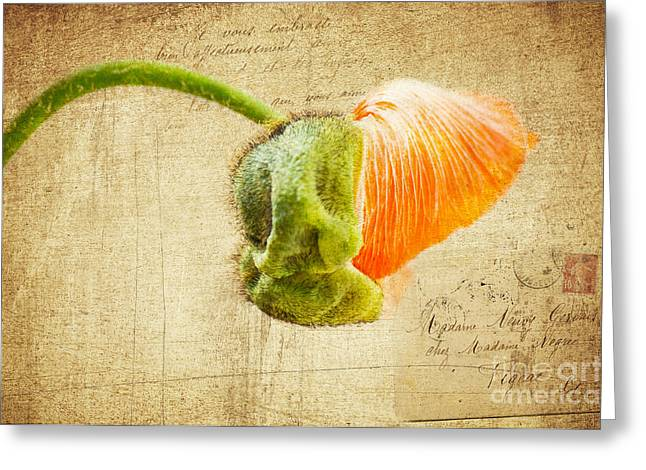 Romance Mixed Media Greeting Cards - Madame Oeillette Greeting Card by Angela Doelling AD DESIGN Photo and PhotoArt