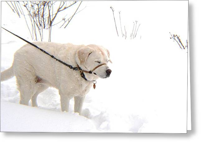 Snowstorm Greeting Cards - Maddie in a Snowstorm Greeting Card by Karen  Majkrzak