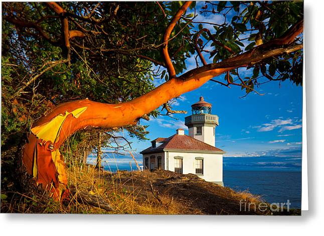 North Sea Greeting Cards - Madrone and Lighthouse Greeting Card by Inge Johnsson