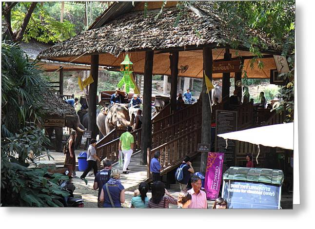 Maesa Elephant Camp - Chiang Mai Thailand - 01135 Greeting Card by DC Photographer
