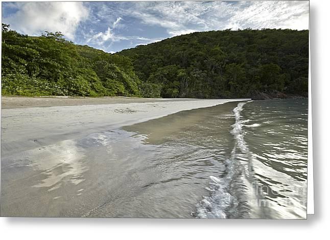 Virgin Pyrography Greeting Cards - Magens Bay Beach Detail 2 Greeting Card by Eyzen M Kim
