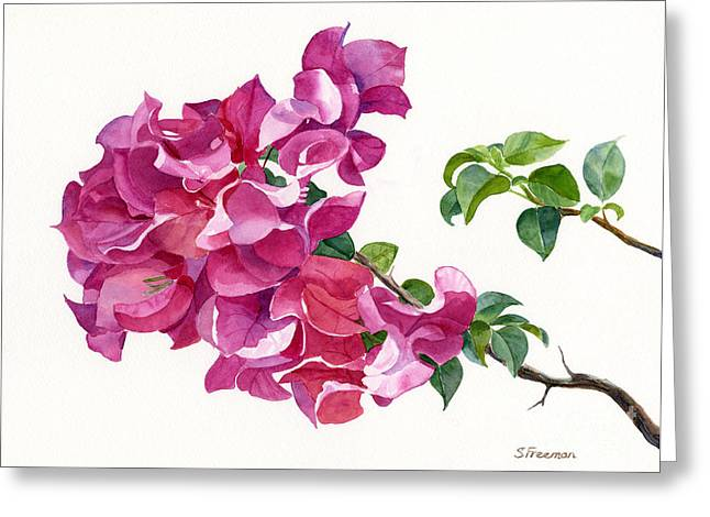 Dark Pink Greeting Cards - Magenta Colored Bougainvillea with Leaves Greeting Card by Sharon Freeman