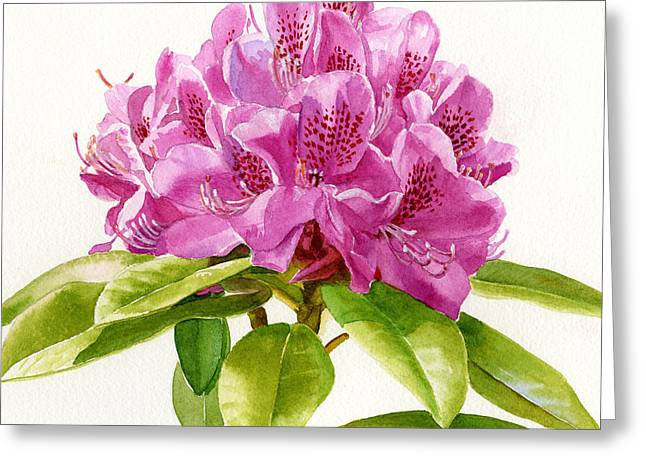 Magenta Greeting Cards - Magenta Colored Rhododendron Square Design Greeting Card by Sharon Freeman
