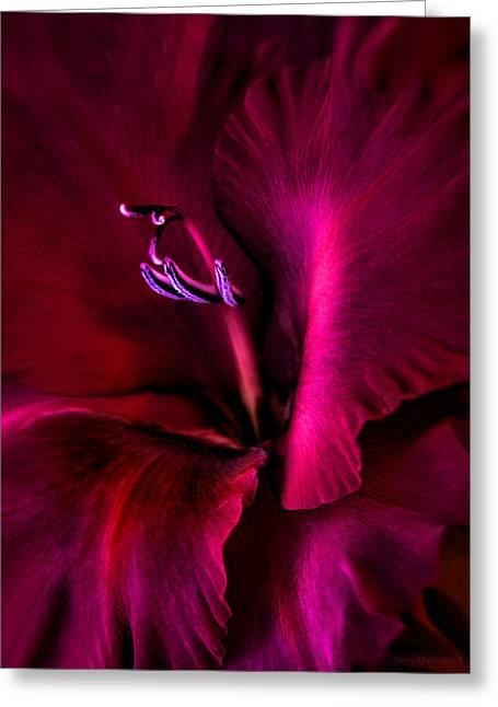 Magenta Gladiola Flower Greeting Card by Jennie Marie Schell