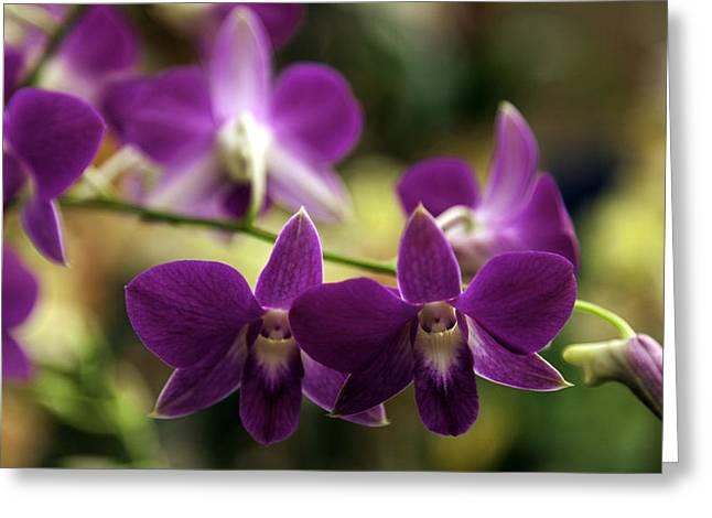 Lynn Palmer Greeting Cards - Magenta Orchids Greeting Card by Lynn Palmer