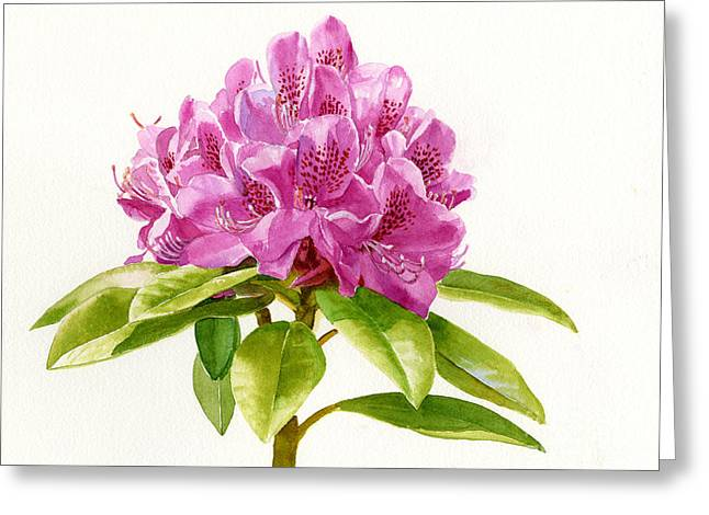 Rhododendrons Greeting Cards - Magenta Rhododendron White Background Greeting Card by Sharon Freeman