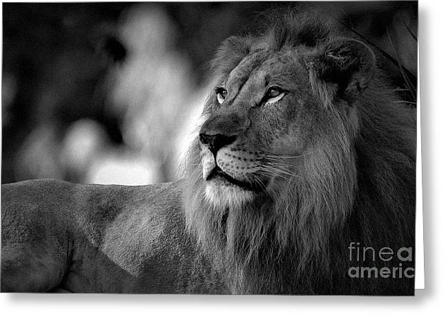 E Black Greeting Cards - Magestic King Greeting Card by Adrian Tavano