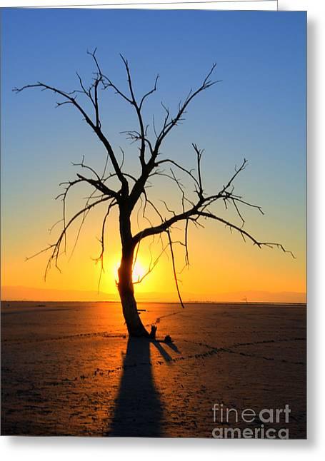 Magic At The Salton Sea Greeting Card by Bob Christopher