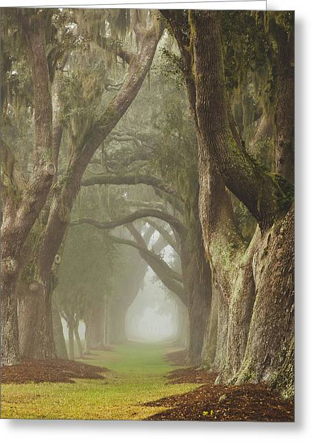 St Barbara Greeting Cards - Magic Forest Greeting Card by Barbara Marie Kraus