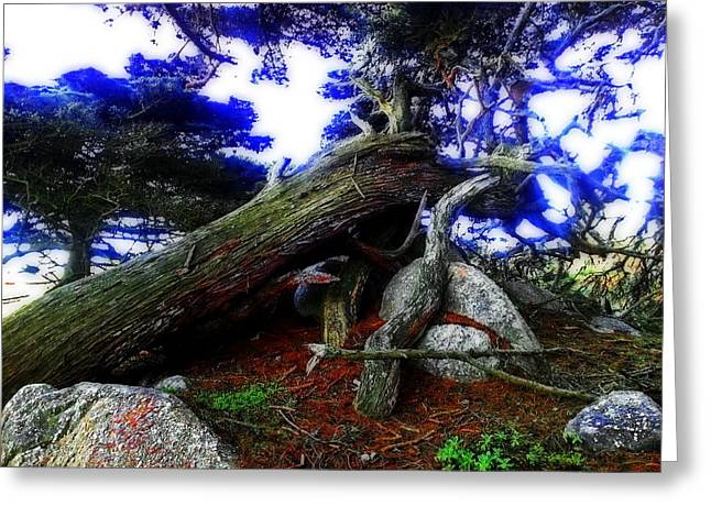 Point Lobos Greeting Cards - Magic Forest Greeting Card by Joseph J Stevens