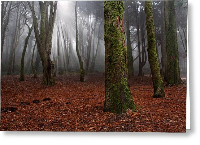 Green Forest Greeting Cards - Magic light Greeting Card by Jorge Maia