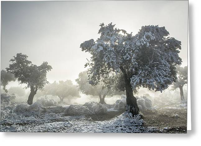 Ice Fog Greeting Cards - Magic morning II Greeting Card by Guido Montanes Castillo