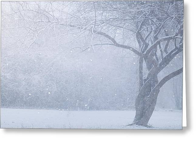Winter Tree Greeting Cards - Magic Of The Season Greeting Card by Carrie Ann Grippo-Pike