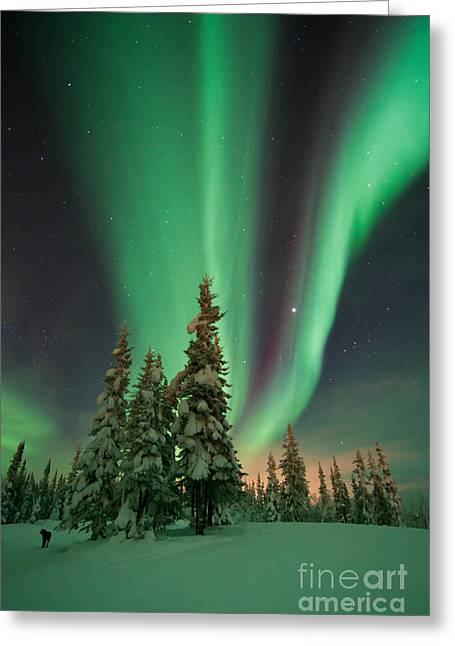 Winter Travel Greeting Cards - Magic winter night Greeting Card by Priska Wettstein