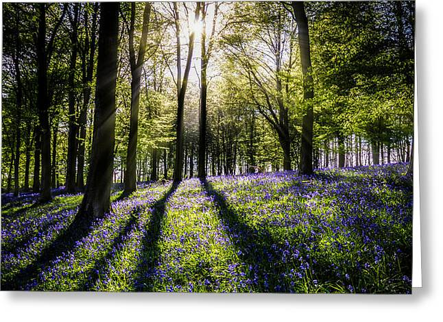 Ashes Greeting Cards - Magic Wood Greeting Card by Ian Hufton