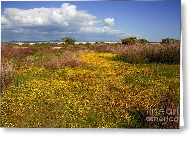 Ludo Greeting Cards - Magic Yellow Carpet Greeting Card by English Landscapes