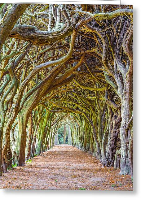 Confined Greeting Cards - Magic Yew Greeting Card by Semmick Photo