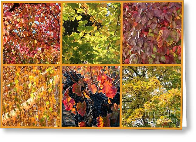 Grape Leaf Greeting Cards - Magical Autumn Colors Collage Greeting Card by Carol Groenen
