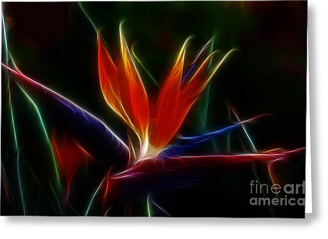 Process Greeting Cards - Magical Bird of Paradise Greeting Card by Sandra Bronstein