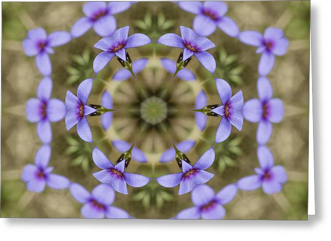 Houstonia Pusilla Greeting Cards - Magical Bluet Wildflower Kaleidoscope Greeting Card by Kathy Clark