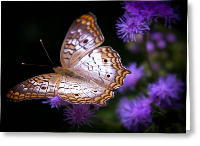 Butterfly In Flight Greeting Cards - Magical Butterfly Greeting Card by Karen Wiles