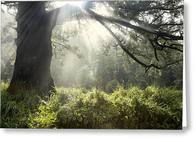 Foggy Beach Greeting Cards - Magical Greeting Card by Debra and Dave Vanderlaan