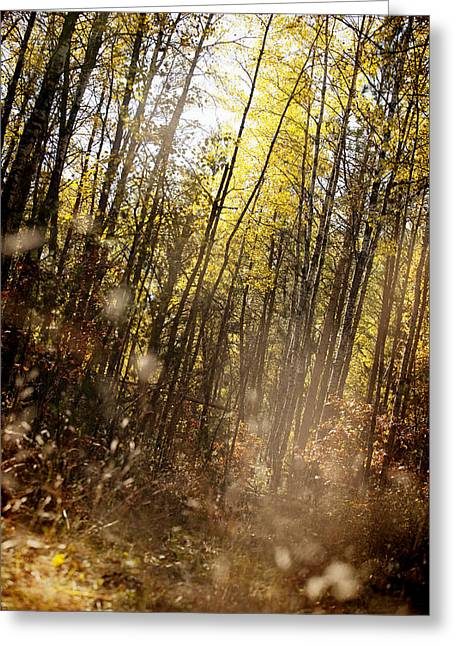 Turning Leaves Photographs Greeting Cards - Magical Fall Greeting Card by Lori Knisely