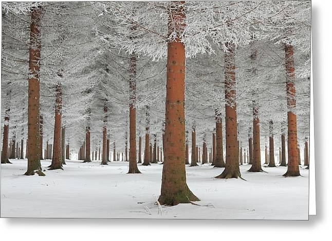 Landscape Photographs Greeting Cards - Magical Forest Greeting Card by Dragisa Petrovic