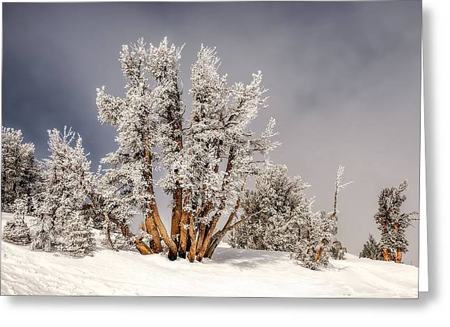 Morning In A Pine Forest Greeting Cards - Magical Forest Greeting Card by Maria Coulson