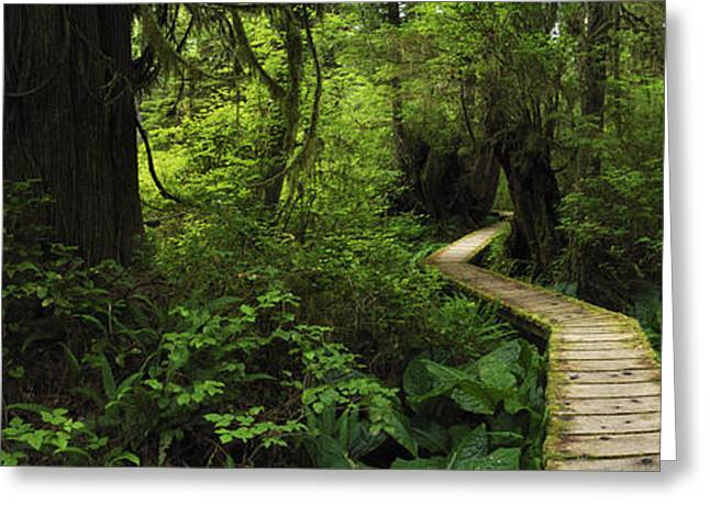 Award Greeting Cards - Magical Forest Trail Greeting Card by Jason Denning