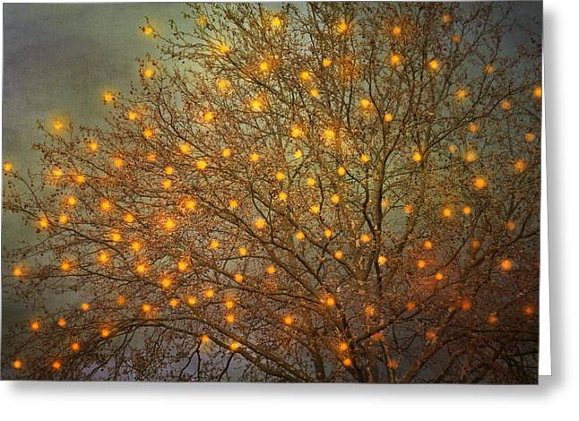 Twinkle Greeting Cards - Magical II Greeting Card by Violet Gray